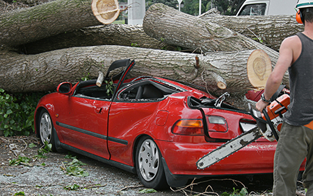 Man holds chain saw near car crushed by cut tree trunks